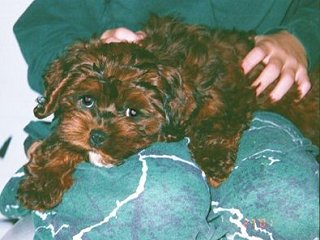 "A ""Never-Changing""