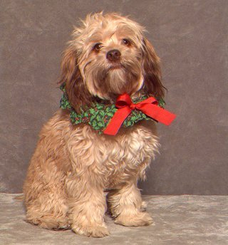 "A ""Changed"" Red Sable