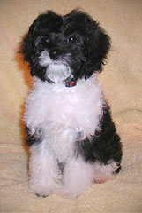 Allie!..
