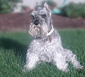 """Shobi"", a