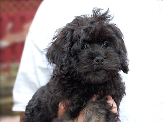 A Black & Silver-coloured