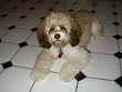 """Abby"", a