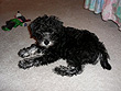 """Merlot"", a