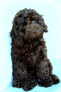 """Finnegan""... a