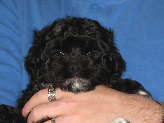 """Mali""... a