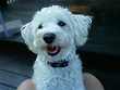 """Maggie"", a