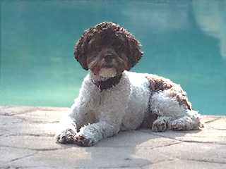"""Coco"", a