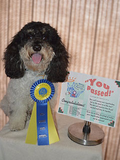 """Gizmo""... a