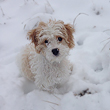 Meredith M., the Red & White Parti