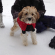 Charlie R., a Sable & White Parti-coloured