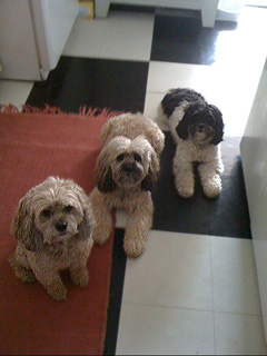 Lillie Bear, Gracie &amp; Tulla... &quot;The Three Poo-sketeers<i>!</i>&quot;