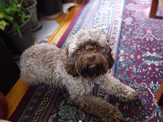 """Aengus Murphy""... an