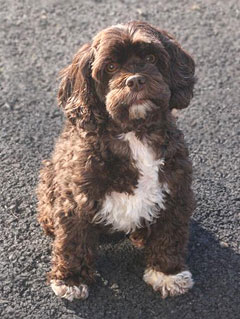 """Tootsie""... a