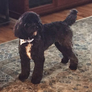"""Ozzy""... a