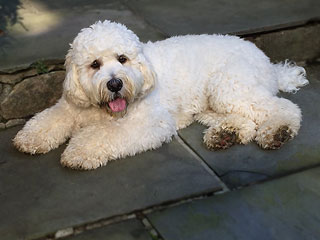 Mr. Bear Cooper, a