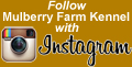 Follow Mulberry Farm Kennel