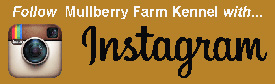 Follow 'Mulberry Farm Kennel'