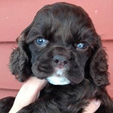 Click here to view our