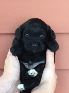 A Black--coloured w/White Hind Paws